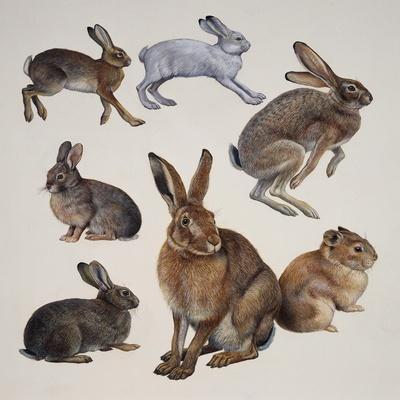 https://imgc.artprintimages.com/img/print/mammals-belonging-to-the-leporidae-family_u-l-pvhg2o0.jpg?p=0