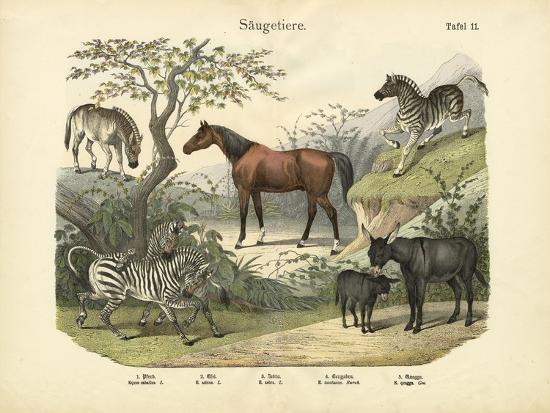 Mammals, C.1860--Giclee Print