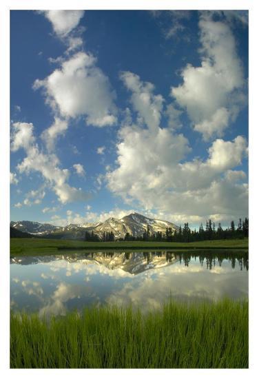 Mammoth Peak reflected in seasonal pool, Yosemite NP, California-Tim Fitzharris-Art Print