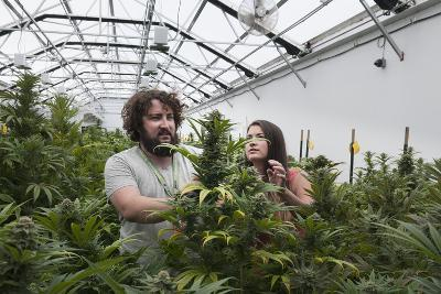 Man and Woman with Cannabis Plant in Organic Marijuana Farm, Pueblo, Colorado, USA, June 2015-Jeff Rotman-Photographic Print