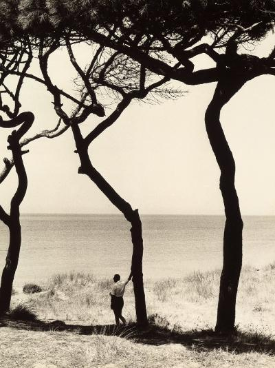 Man Leaning on the Trunk of a Pine Tree on the Seashore-Vincenzo Balocchi-Photographic Print