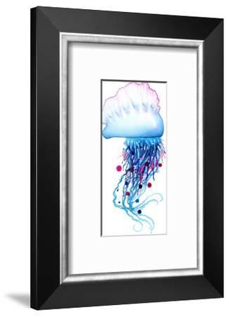 Man O' War Jellyfish-Sam Nagel-Framed Art Print