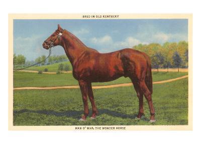 Man O'War, Kentucky Thoroughbred--Art Print