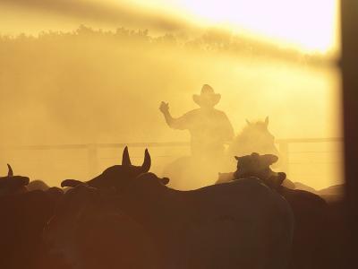 Man on Horse Working Cattle in Yards, Bullo River Station, Near Kununurra-Michael Gebicki-Photographic Print