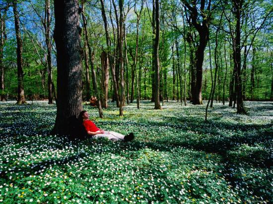 Man Resting Against Tree amidst Anemones in Spring, Dalby Soderskog National Park, Skane, Sweden-Anders Blomqvist-Photographic Print