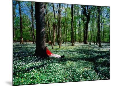 Man Resting Against Tree amidst Anemones in Spring, Dalby Soderskog National Park, Skane, Sweden-Anders Blomqvist-Mounted Photographic Print