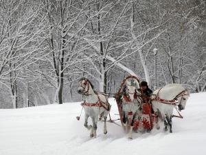 Man Rides a Sleigh Carrying Tourists in Park on a Bank of Moskva River at Outskirts of Moscow