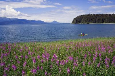 Man Sea Kayaking Along Shoreline of Admiralty Island with Fireweed Southeast Ak Inside Passage Summ-Design Pics Inc-Photographic Print