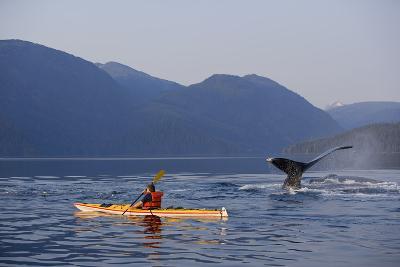 Man Sea Kayaking Near Swimming Pod of Humpback Whales Inside Passage Southeast Alaska Summer-Design Pics Inc-Photographic Print