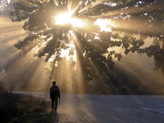Man Walking Along a Street with Sun Rays Shining Through a Tree, Highlands, Myanmar-Michael Runkel-Photographic Print