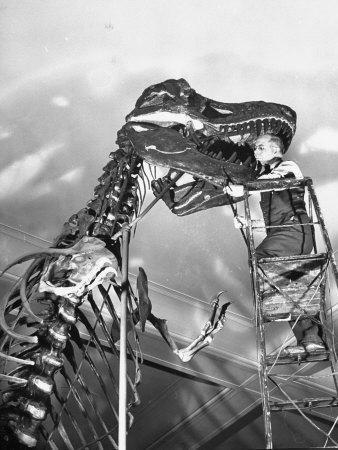 https://imgc.artprintimages.com/img/print/man-working-on-skeleton-of-a-tyrannosaurus-at-the-american-museum-of-natural-history_u-l-p6dwoa0.jpg?p=0