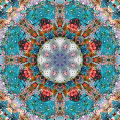 https://imgc.artprintimages.com/img/print/mandala-of-flower-photographies_u-l-q11zcp20.jpg?p=0
