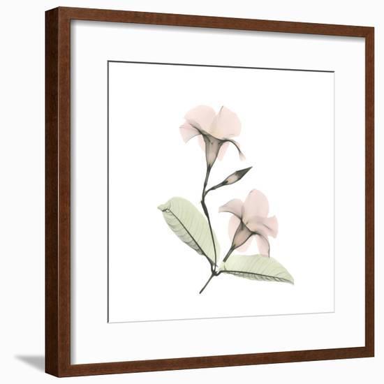 Mandelila Square-Albert Koetsier-Framed Premium Giclee Print
