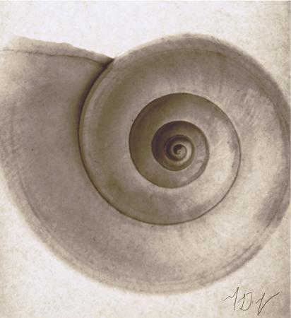 mandolfo-snail-shell