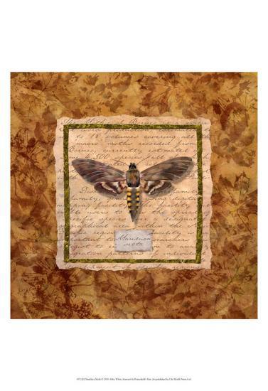 Manduca Moth-Abby White-Art Print