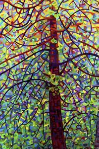 Kaleidoscope by Mandy Budan