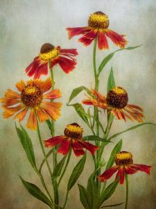 Cabaret by Mandy Disher