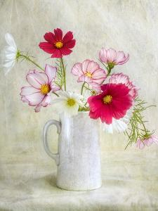 Cosmos Carnival by Mandy Disher