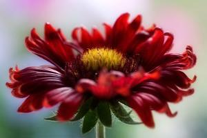 Flame by Mandy Disher