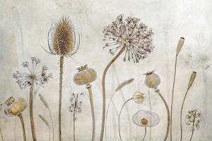 Growing Old by Mandy Disher