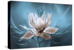 Nigella by Mandy Disher