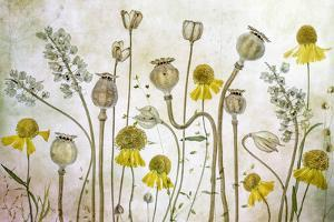 Poppies and Helenium by Mandy Disher