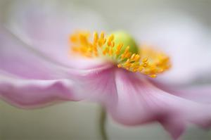 Untitled by Mandy Disher