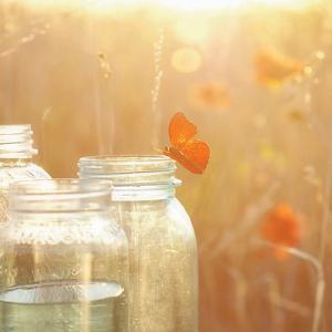 Butterfly Perch by Mandy Lynne