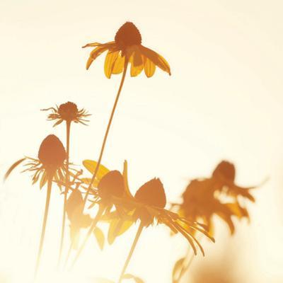 Sundown Flowers