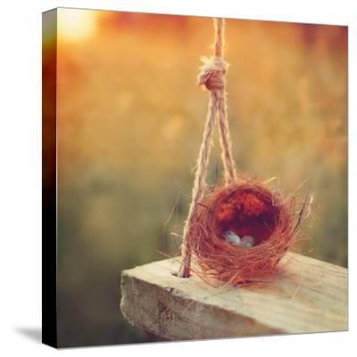 Swing and Nest