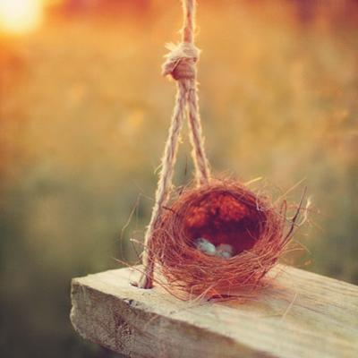 Swing and Nest by Mandy Lynne