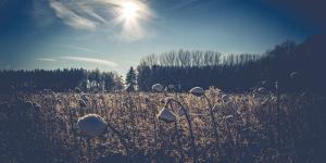 Sunflower field in winter by Mandy Stegen