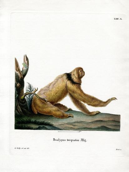 Maned Sloth--Giclee Print
