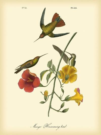 Mango Hummingbird-John James Audubon-Art Print