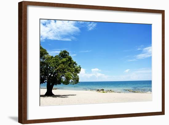 Mango Tree on the Beach on a Sunny Day, Chintheche Beach, Lake Malawi, Africa-Yolanda387-Framed Photographic Print