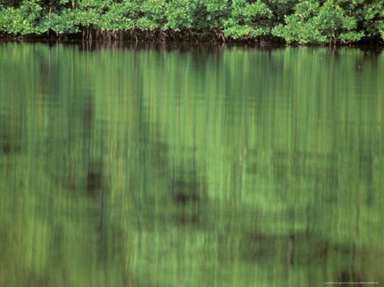 Mangrove, 10,000 Islands, Everglades, Florida, USA-Connie Bransilver-Photographic Print