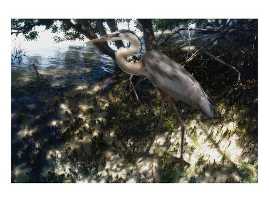 Mangrove Heron-Steve Hunziker-Art Print