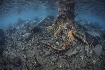 Mangrove Roots Rise from the Seafloor of an Island in Indonesia-Stocktrek Images-Photographic Print