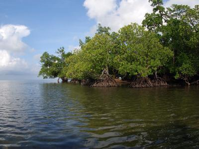 Mangroves a the Edge of a Small Island in the Celebes Sea-Darlyne A^ Murawski-Photographic Print