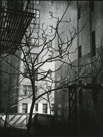 https://imgc.artprintimages.com/img/print/manhattan-courtyard-new-york-1945_u-l-q1g6wag0.jpg?p=0