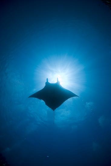 Manta Swimming Underwater, Low Angle View-Yusuke Okada/a.collectionRF-Photographic Print