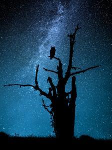 Alone in the Dark by Manu Allicot