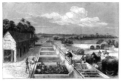 Manufacturing Indigo in Tirhoot (Muzaffarpu), Lower Bengal, 1869--Giclee Print