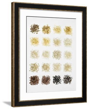 Many Different Types of Rice Laid Out in Small Squares-Bodo A^ Schieren-Framed Photographic Print