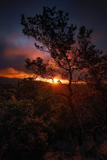 Manzanita Morning Magic Sun Star Oakland Hills Bay Area-Vincent James-Photographic Print