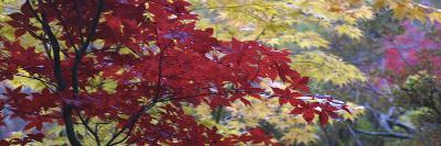 Maple Glade I-Bill Philip-Giclee Print