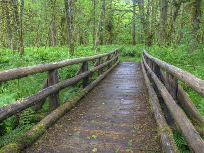 Maple Glade Trail Wooden Bridge, Quinault Rain Forest, Olympic National Park, Washington, USA-Jamie & Judy Wild-Photographic Print