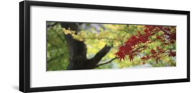 Maple Glade VII-Bill Philip-Framed Giclee Print