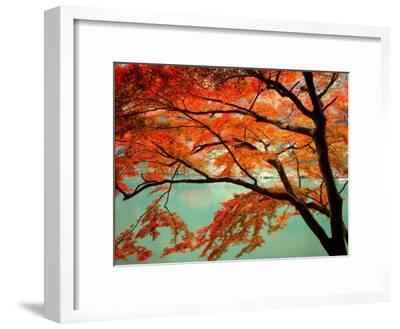 Maple Leaves, Arashi-Yama, Kyoto, Japan