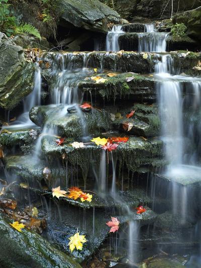 Maple Leaves on Rock of Small Falls on Kitchen Creek, Ricketts Glen State Park, Pennsylvania, Usa-Tim Fitzharris-Photographic Print